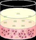 Cytotoxic Compund Solid Tumor
