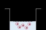 Migration Cell Retrieval